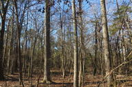 Forestry Road Dover AR, 72837