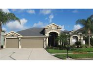 1631 Swamp Rose Lane Trinity FL, 34655
