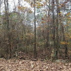 61 Acres David Jones Road Eufaula AL, 36027