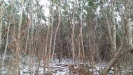 Lot 2 Burd Hollow Road Port Royal PA, 17082