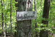Lot 12 Echo Lane South Old Fort NC, 28762