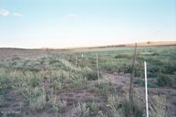 Lot 433 Carrizo Ranches Cr N6130 Saint Johns AZ, 85936