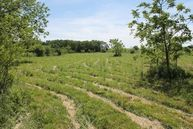 Tbd Red Springs Road Mountain Grove MO, 65711