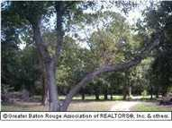 Lot 23 Bayou Paul Ln Saint Gabriel LA, 70776