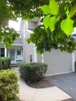11 Dorset Ln Bedminster NJ, 07921