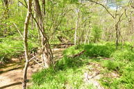 51 Acres Cr 302 Fayette MO, 65248