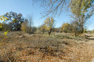 Lot 15a2 Apple Blossom Lane Corrales NM, 87048