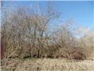 000000 County Rd 4509 Commerce TX, 75428