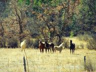 Baca Ranch, Highway 121 Chacon NM, 87713