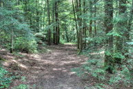 100 Ac. Wolfhaven Road Spencer TN, 38585