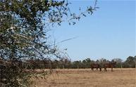 24124 Margerstadt Rd Hockley TX, 77447