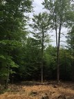Lot #9 Spring Woods Rd Lake George NY, 12845