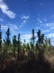 80 Ac. Forest Lake Road Beaumont MS, 39423