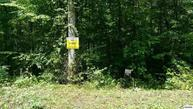 Lot 20 Sugar Maple Cosby TN, 37722