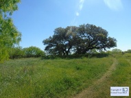 10725 State Park Rd Thrall TX, 76578