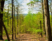 235 Acres Mineral Springs Mt Rd Connelly Springs NC, 28612