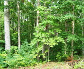Lot 23 Pine Grove Estates Lerona WV, 25971