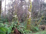 357th Ln Oysterville WA, 98641
