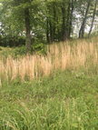 Lot 11 Cobblestone Drive Rickman TN, 38580