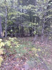 Lot 139 Pennmaric Road Augusta ME, 04330