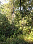 0 Coopers Neck Rd Hilliard FL, 32046