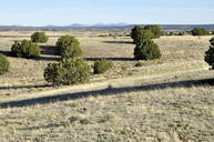 Lot 142 Cr 5500 Concho AZ, 85924