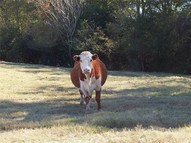 Tbd County Road 4315 Cookville TX, 75558
