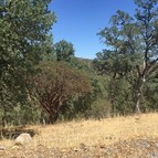 62 Lot Harness Drive Pope Valley CA, 94567