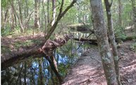 Tbd Jd Smith Trail Glen Saint Mary FL, 32040