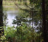 Lot 5 Whispering Pines Dr. Rochelle GA, 31079