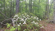 Lot 13 Echo Lane South Old Fort NC, 28762