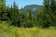 489 Grouse Road Sandpoint ID, 83864