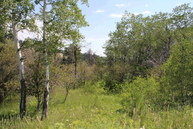 Lot 4 Whispering Pines Road Story WY, 82842