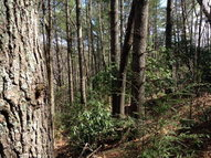 Lot 64 & 65 Blueberry Hill West Jefferson NC, 28694