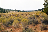 129.86 Acres In Bryce Canyon Lots 18 & 19 Bryce Canyon UT, 84764